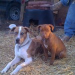 Pet Photos: Red & Missy- http://www.arkcountrystore.com