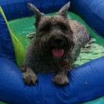 Pet Photos: Dixie- http://www.arkcountrystore.com