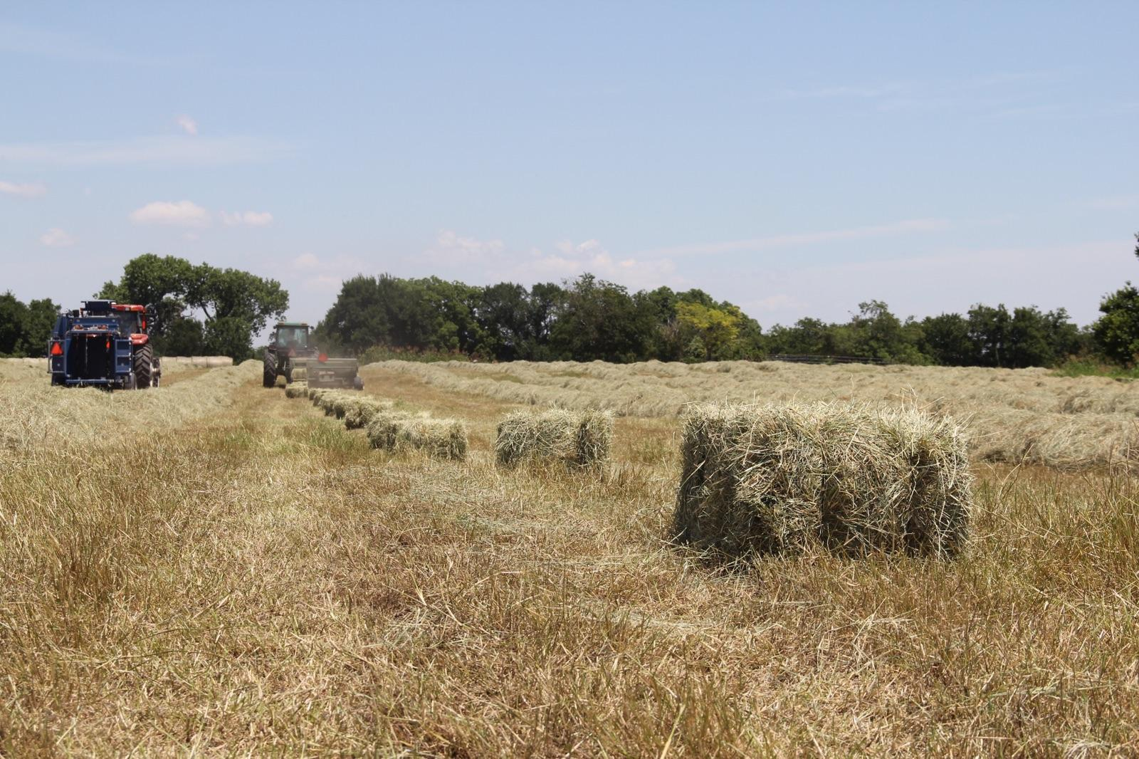 Hay in Ellis County