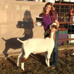 Sinclaire - Showmanship Champion-https://www.arkcountrystore.com/