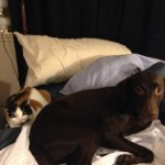Ark Pet Feature- Cali and Charlie- www.arkcountrystore.com #cat #dog