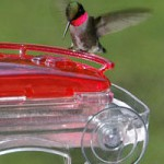 When to take down your hummingbird feeder- https://www.arkcountrystore.com/