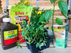 Spring Plants and Fertilizers